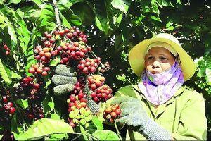 Làm gì để phát triển cà phê đặc sản?
