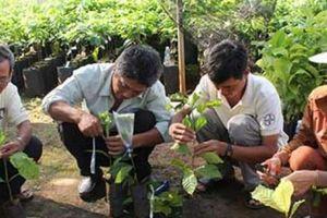 Chuỗi cà phê bền vững: 'Lối thoát' cho người trồng cà phê?