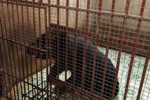 Giải cứu 5 con gấu ở Bình Dương và Đồng Nai