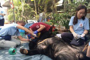 Giải cứu gấu bị nuôi nhốt ở Bình Dương