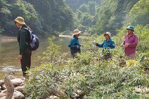 Thừa Thiên - Huế: Kỷ luật 6 cán bộ vì để rừng đầu nguồn bị phá