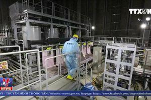 Nhật Bản: Trở ngại mới trong công tác khử độc sau thảm họa 2011