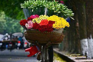 Hoa loa kèn tinh khôi xuống phố Hà Nội