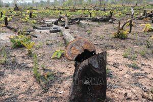 Thông tin chính thức về việc 2,7 ha rừng vành đai biên giới ở Gia Lai bị phá