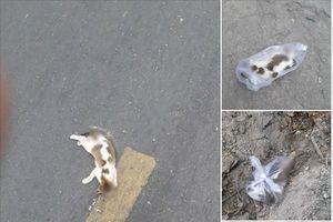 Có lòng tốt chôn cất con mèo đã chết, chàng xe ôm 9X vô tình gây ra màn tranh cãi trên mạng xã hội