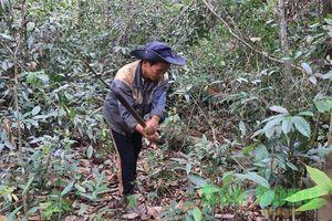 Nỗ lực bảo vệ và phát triển rừng