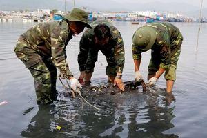 Tiêu hủy ngư lôi được phát hiện ven biển Quảng Ngãi