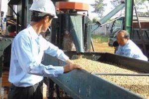 Bao giờ cà phê hết là 'trái đắng'? (Bài cuối): VICOFA hiến kế