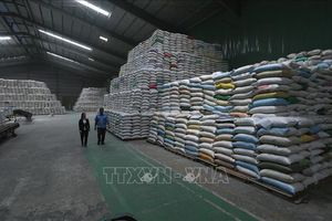 Thúc đẩy tiêu thụ lúa gạo - Bài cuối: Có chiến lược dài hơi
