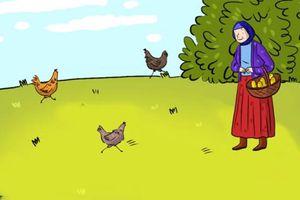 Câu đố gà đẻ trứng khiến 90% người trả lời sai