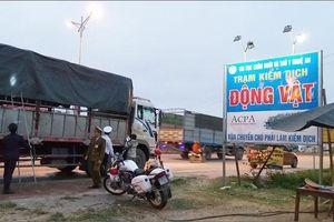 Nghệ An công bố dịch tả lợn châu Phi xuất hiện tại Quỳnh Lưu
