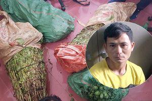Bốn thanh niên cùng nhau trồng một nương thuốc phiện ở Lào Cai