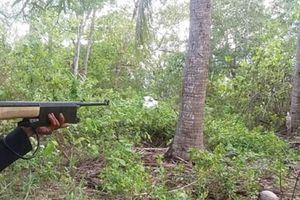 Vụ bắn chết bố vợ vì tưởng thú rừng: Báo động về việc sử dụng súng
