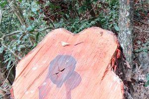 Khẩn trương điều tra, làm rõ vụ phá rừng trong Vườn quốc gia Phong Nha - Kẻ Bàng