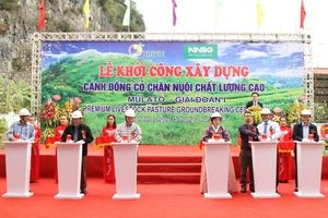Khởi công dự án trồng cỏ chất lượng cao Mulato II tại Sơn La