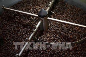 Từng bước tăng giá trị cho cà phê Việt