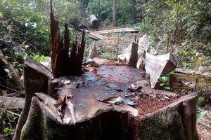 Bắt 5 đối tượng khai thác gỗ rừng trái phép