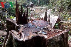 Gia Lai: Bắt 5 đối tượng khai thác gỗ trái phép