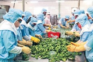 Làm gì để xuất khẩu nông sản đạt mục tiêu?