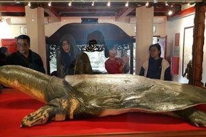 Hà Nội nhận mẫu vật đặc biệt rùa Hồ Gươm