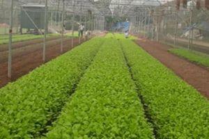 Thúc đẩy nông nghiệp 4.0: Gỡ các nút thắt