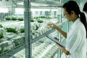 TP.HCM: Ngoại thành 'cất cánh' nhờ nông nghiệp công nghệ cao