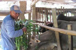 'Đòn bẩy' giúp đồng bào Khmer thoát nghèo bền vững