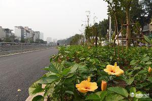 Diện mạo mới con đường đi bộ dài nhất Thủ đô