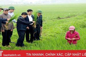 Đức Thọ kịp thời khống chế bệnh đạo ôn trên lúa