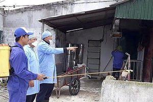 Phát hiện thêm ổ dịch tả lợn Châu Phi ở Nghệ An