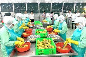 Thay đổi để xuất khẩu ổn định sang Trung Quốc