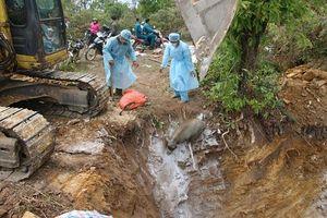 Sơn La: Huyện thứ 2 phát hiện dịch tả lợn châu Phi