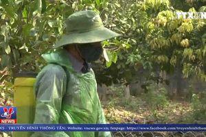 Thị xã Hoàng Mai nỗ lực bảo vệ đàn lợn giữa vùng dịch