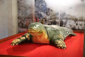 Chính thức ra mắt tiêu bản cụ rùa Hồ Gươm ở Đền Ngọc Sơn
