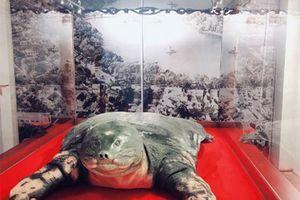 Bàn giao tiêu bản 'cụ rùa' về đền Ngọc Sơn