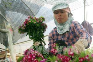 Nam Định: Hợp tác xã kiểu mới hoạt động hiệu quả