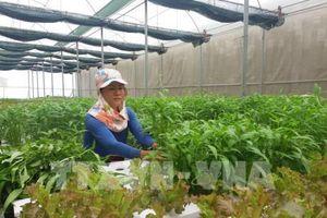 Bình Dương ưu tiên hàng đầu phát triển nông nghiệp đô thị công nghệ cao