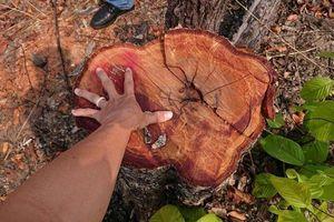 Đắk Lắk: Hơn 11 ha rừng bị đốt, chặt phá ở huyện biên giới Ea Súp