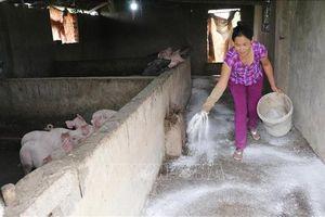 Nghệ An thực hiện đồng bộ các giải pháp phòng, chống dịch tả lợn châu Phi