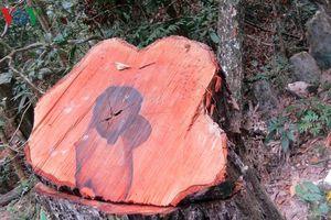 Quảng Bình điều tra vụ phá rừng ở Vườn Quốc gia Phong Nha - Kẻ Bàng