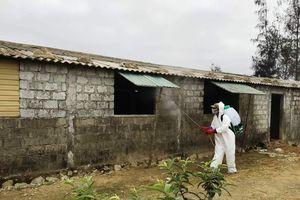 Hà Tĩnh: Ráo riết phòng, chống dịch tả lợn châu Phi
