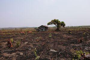 Người từng để mất rừng lại được giao giữ rừng