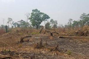 Khởi tố vụ phá gần 5 héc ta rừng phòng hộ