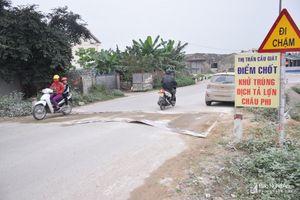Lơ là, chủ quan trong phòng chống dịch tả lợn châu Phi ở Quỳnh Lưu?