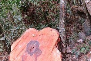Vụ phá rừng nghiêm trọng tại VQG Phong Nha – Kẻ Bàng: Thành lập đoàn kiểm tra liên ngành
