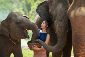 Sự thực 'choáng' voi nhìn thấy con người giống như này
