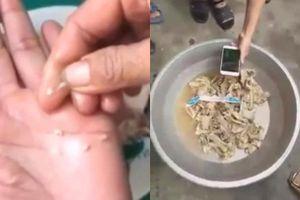 Vụ nghi tuồn thịt bẩn vào trường mầm non ở Bắc Ninh: Thịt gà đạt chỉ tiêu an toàn thực phẩm