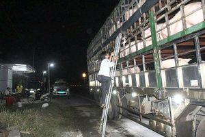 Lập thêm chốt trên Quốc lộ 1 chặn dịch tả lợn châu Phi