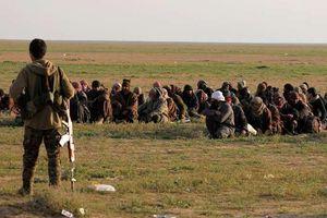 Syria: 157 phiến quân IS bị bắt