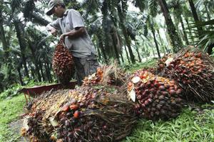Malaysia đe dọa trả đũa nếu EU tiếp tục chống lại xăng sinh học từ dầu cọ